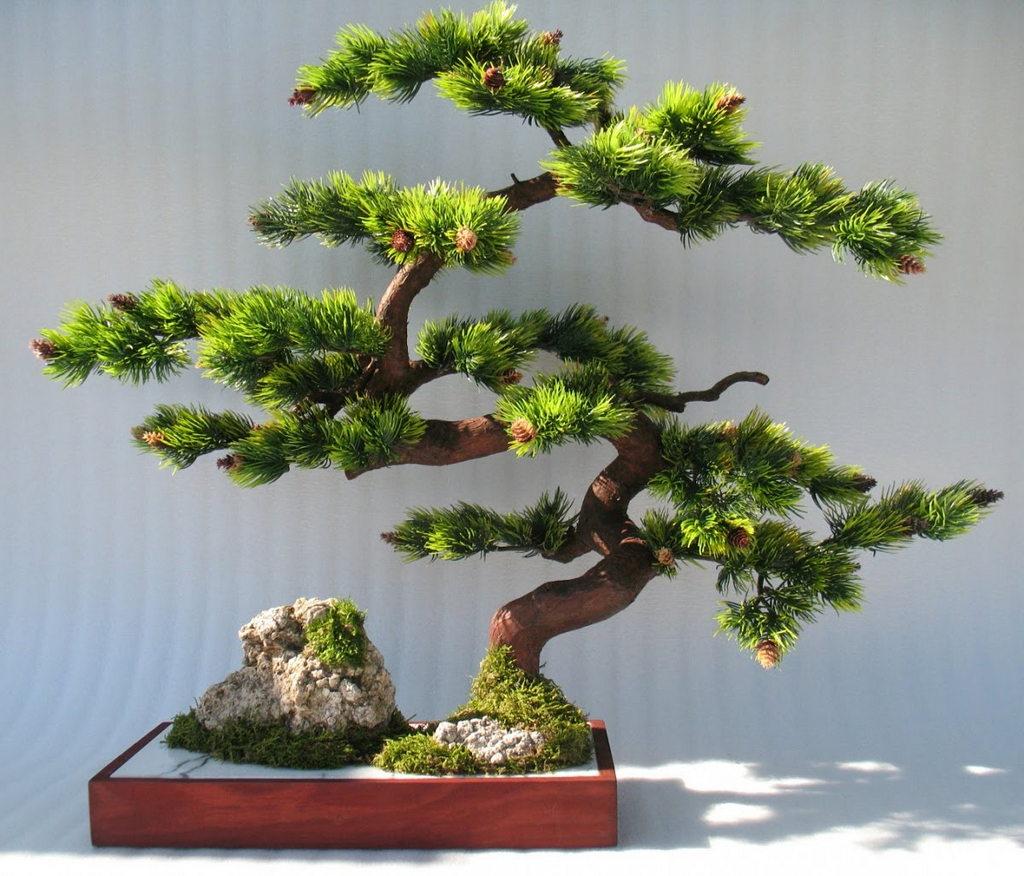 Дерево бонсай в квартире
